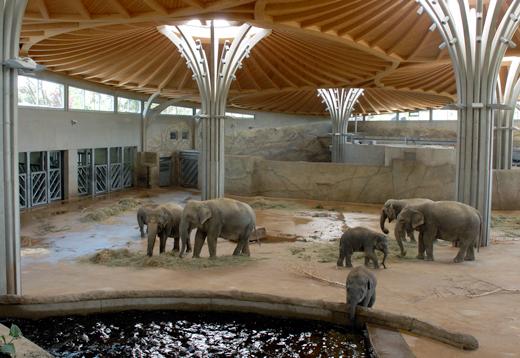 Elefanten im Kölner Zoo