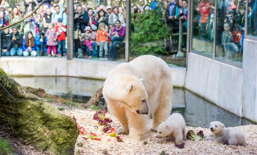 Tierpark Hellabrunn in München Thalkirchen
